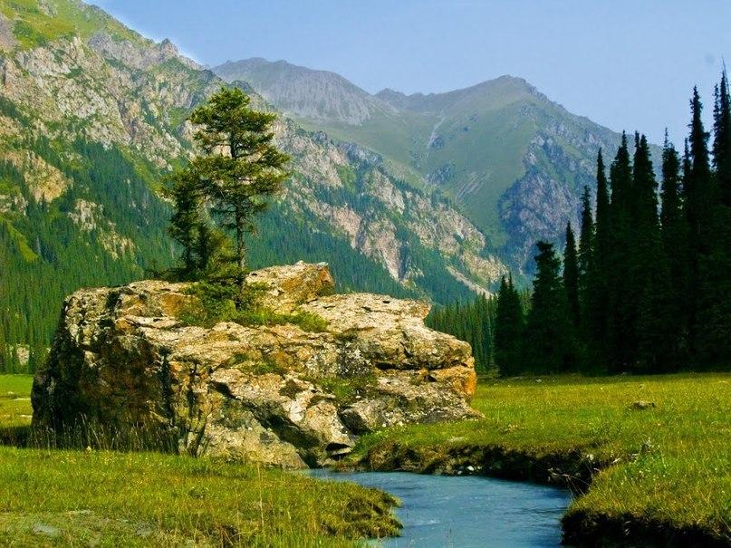 живые картинки природа кыргызстана посмотреть пейзажном саду