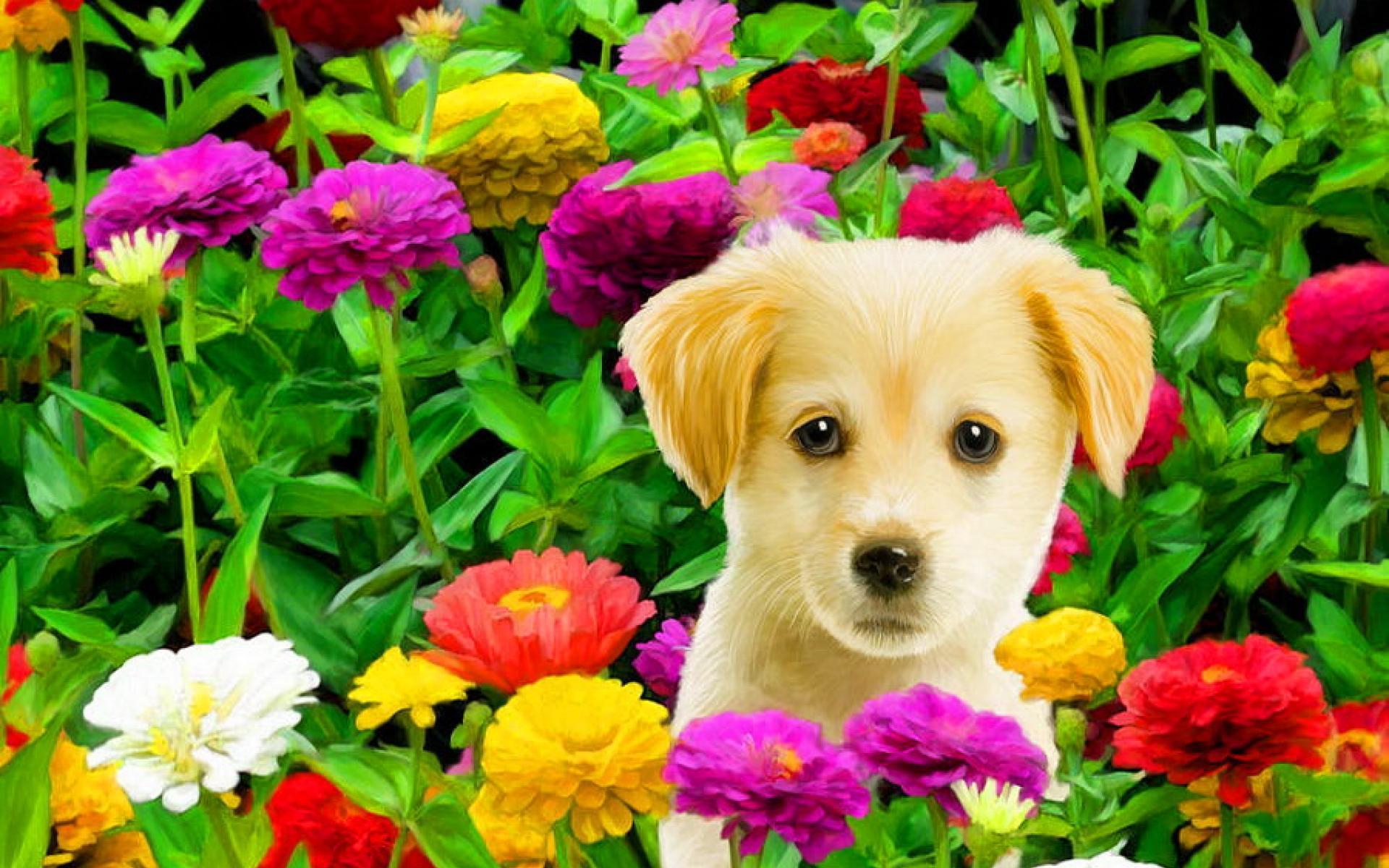 Собаки и цветы картинки, очаровашка днем рождения