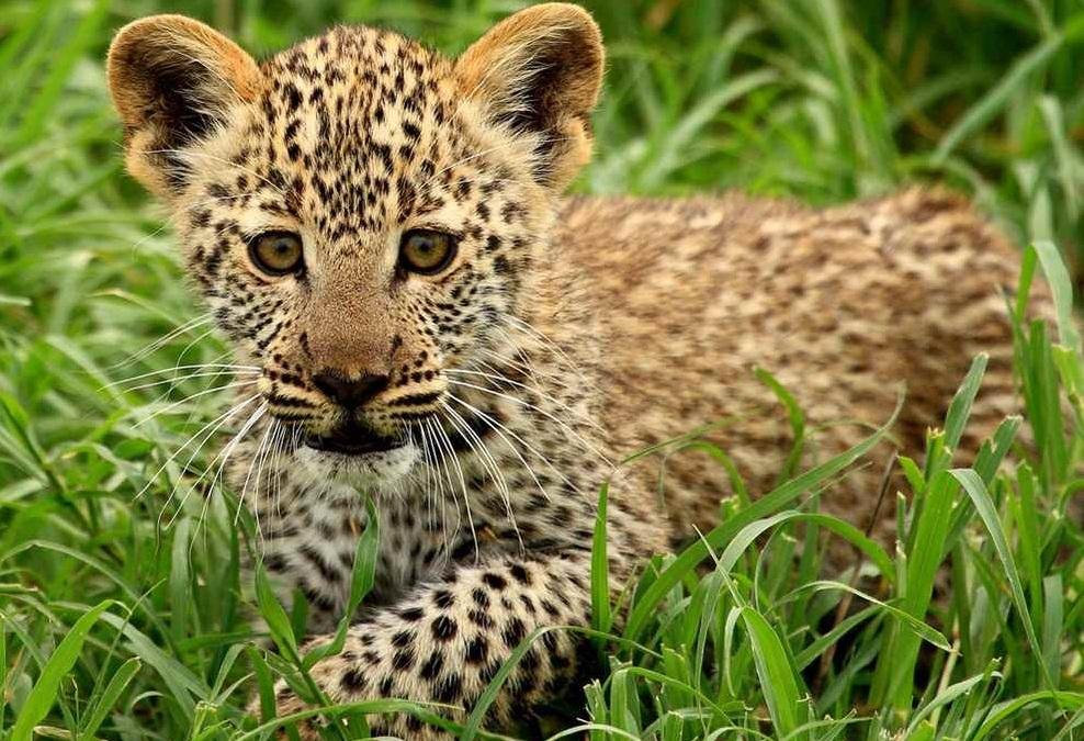 самые красивые животные фото и картинки чтобы