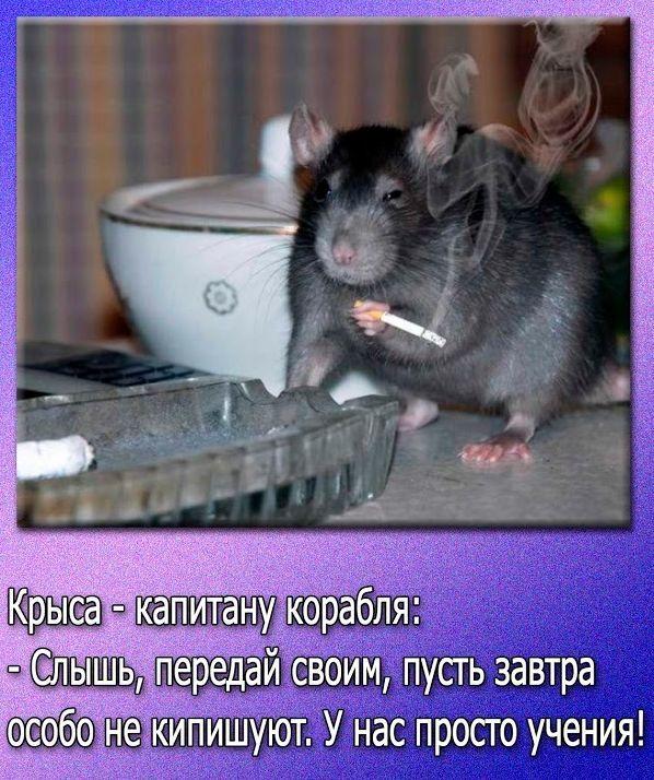 Картинки с надписями люди какие же вы крысы, открытки сестре открытки