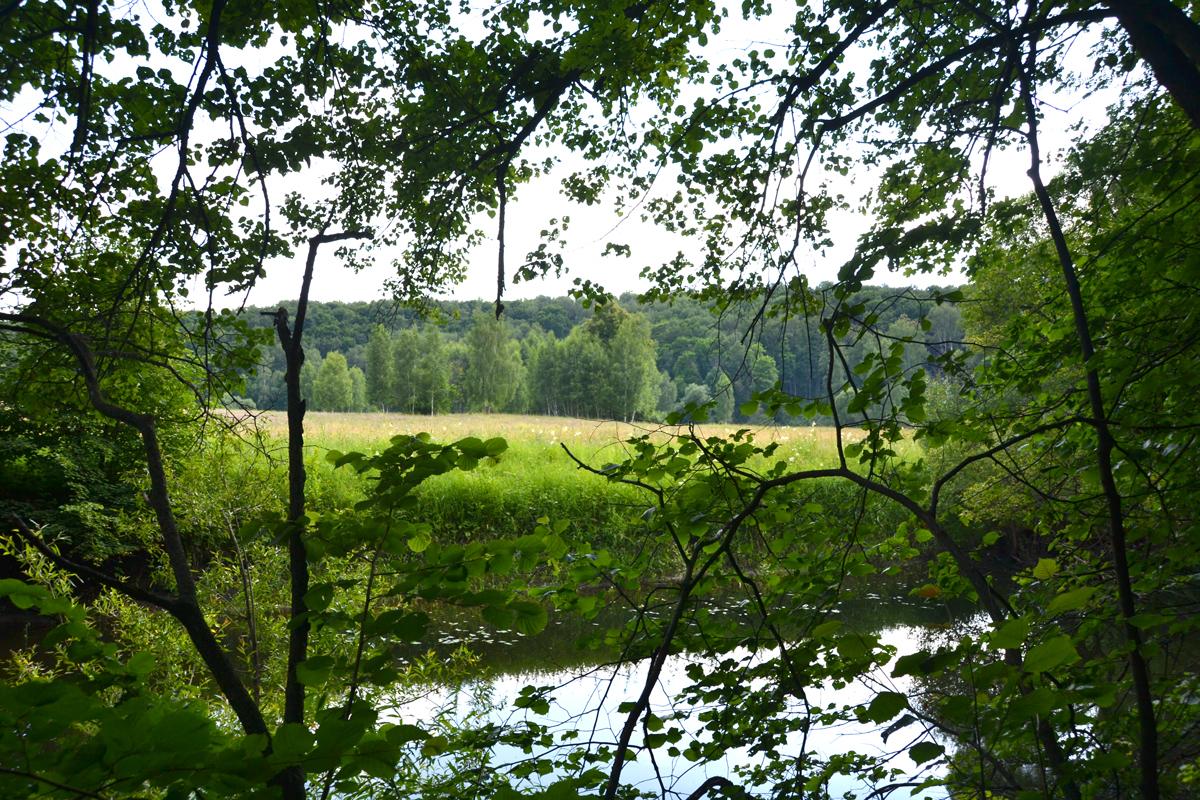 12. Вид на реку Осётр из леса